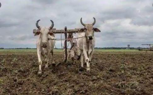 My Bharat News - Article FARMER 1